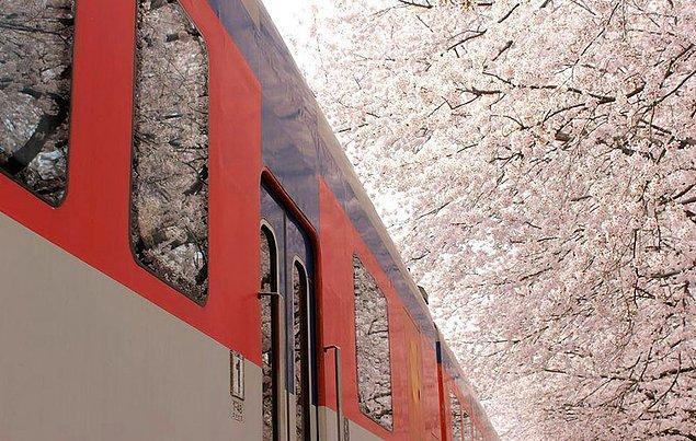 8. Bahar treni