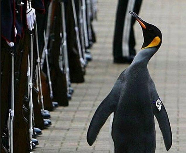22. Nils Olav, Norveç tarafından şövalyelik ünvanıyla onurlandırılan tek penguen.