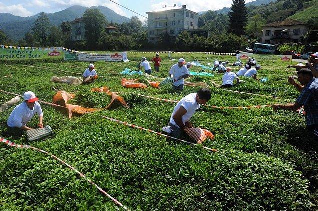 1. Buram buram çay kokan Arhavi'nin, çay severler için bir cennet olması.