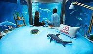 Airbnb, Köpek Balığı Manzaralı Odada Çift Kişilik Bir Gece Geçirme İmkânı Sunuyor
