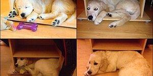Boyundan Büyük Dertlerle Başa Çıkmaya Çalışan 17 Yavru Köpek!