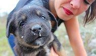 Sokaklarda Yaşayan Hayvanlar Hakkında Bilmeniz Gereken 15 Gerçek