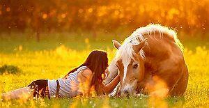 İnsanların En Süper Dostları Atlar ve Köpeklerle Yaşadıkları 10 Muhteşem An