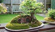 """""""Keşke Benim de Bir Tane Olsa"""" Diyeceğiniz Hepsi Birbirinden Güzel 39 Bonsai Ağacı"""