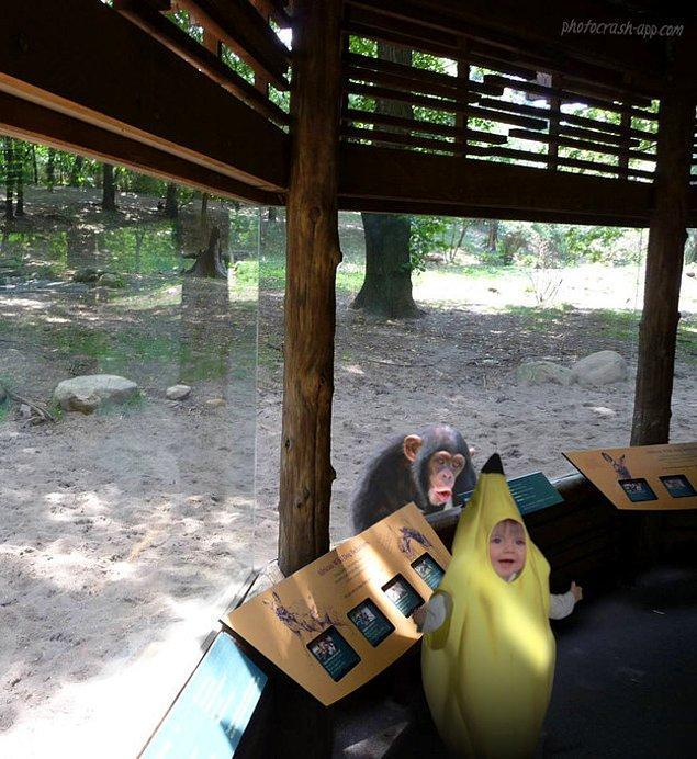 """Я пойду в зоопарк при одном условии: я буду в костюме банана!"""