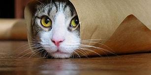 Kedi Olalı Bir Fare Tutmanıza Gerek Kalmadan Ev Arkadaşınızı Şaşkına Çevirecek 15 Gariplik