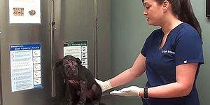 Çaresiz Biçimde Ölümü Beklerken Hayata Dönüş Hikayeleriyle İçinizi Isıtacak 8 Köpek