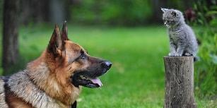 Köpeklerin, Sadece İnsanların Değil Bizim de En İyi Dostlarımız Olduğuna Dair 22 Neden
