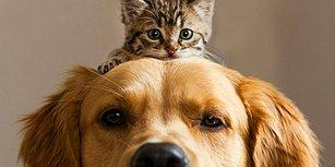 Patili Bir Ev Arkadaşı Edinmeniz İçin 11 Neden