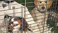 Hayvanları Kafeslerde Görmek İstemiyoruz