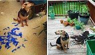 Köpeklerin Mütemadiyen Komik Olduğunu Bir Kez Daha Kanıtlayan 28 Eğlenceli Halleri