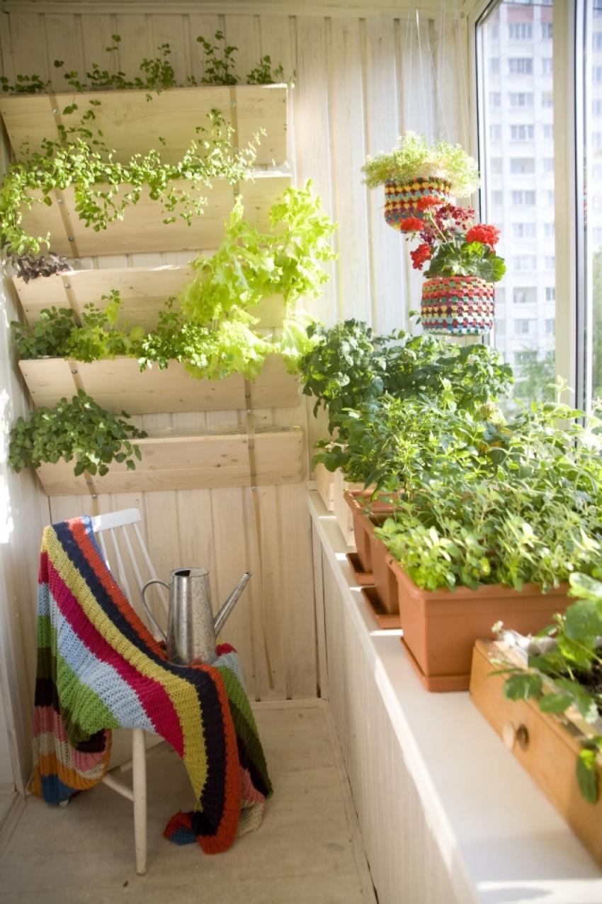Как украсить балкон и лоджию цветами фото