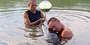 Yavru Balina Boğulmak Üzereyken Sörfçüler Tarafından Kurtarıldı