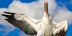 Kanatlıların Dünyası: 7. Audubon Fotoğraf Ödülleri