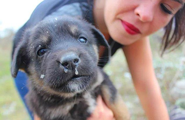 1. Sokaklarda Yaşayan Hayvanlar Hakkında Bilmeniz Gereken 15 Gerçek
