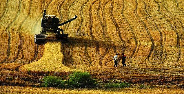"""1- Tarım arazisi denilince toprak akla gelir. Toprak ise içinde yaşayan canlılarla birlikte bir bütündür. Bu canlılar toprağı bitkisel üretim için hazırlar. Ancak 60'lı yıllardan başlayarak ilaç ve gıda tekelleri tarafından """"Yeşil Devrim"""" adıyla kamuoyuna sunulan 'kimyasalların kullanımı' topraktaki bu canlıları öldürmeye başlamış ve toprağın canlılığını zaman içinde yoketmiştir. Artık geriye toprak görünümlü 'kum taneleri' kalmakta bitkisel üretim zayıflamaktadır."""
