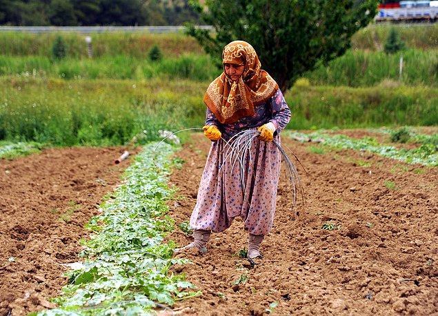 Gençlerin çalışmak için kırsal kesimden göç etmesi sebebiyle arazide çalışanların çoğu kadınlardan oluşuyor
