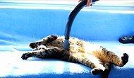 Elektrikli Süpürge ile Kendine Bir Güzel Masaj Yaptıran Kedi