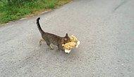 Komşusunun Kaplan Oyuncağını Çalmayı Kafasına Koyan Kediyi Hiçbir Parmaklık Durduramaz!