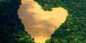 Çünkü Hepimiz Aynı Gemideyiz: Elin Norveç'i Brezilya'nın Amazon Ormanlarını Kurtarıyor