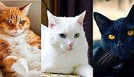 Kediyiz, Birbirimize Benzeriz: İsimlerine Göre Kedilerin Karakter Analizi