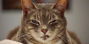 İtliğin, Şerefsizliğin, Her Türlü Kabadayılığın Kitabını Yazmış 19 Kedi