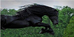 Bürrrsss Hay Maşallah! Dünyanın En Yakışıklı Atı Karizmatik Frederik ile Tanışın
