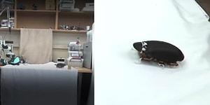 Zıplayan Robot Böcek ile Kabuslarınız Gerçeğe Dönüşecek