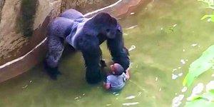 Olan Gene Hayvanlara Oldu: Hayvanat Bahçesinde Küçük Çocuk Goril Kafesine Düştü