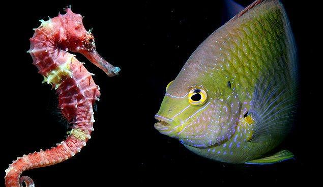 11. Erkeklerin, dişilere göre yavruyu yetiştirmek konusunda daha fazla rol oynadığı denizatı, bazı kurbağa ve kuş türlerine bakıldığında ise, dişilerin birbirlerine karşı şiddet uygulamaya daha yatkın oldukları görülüyor.