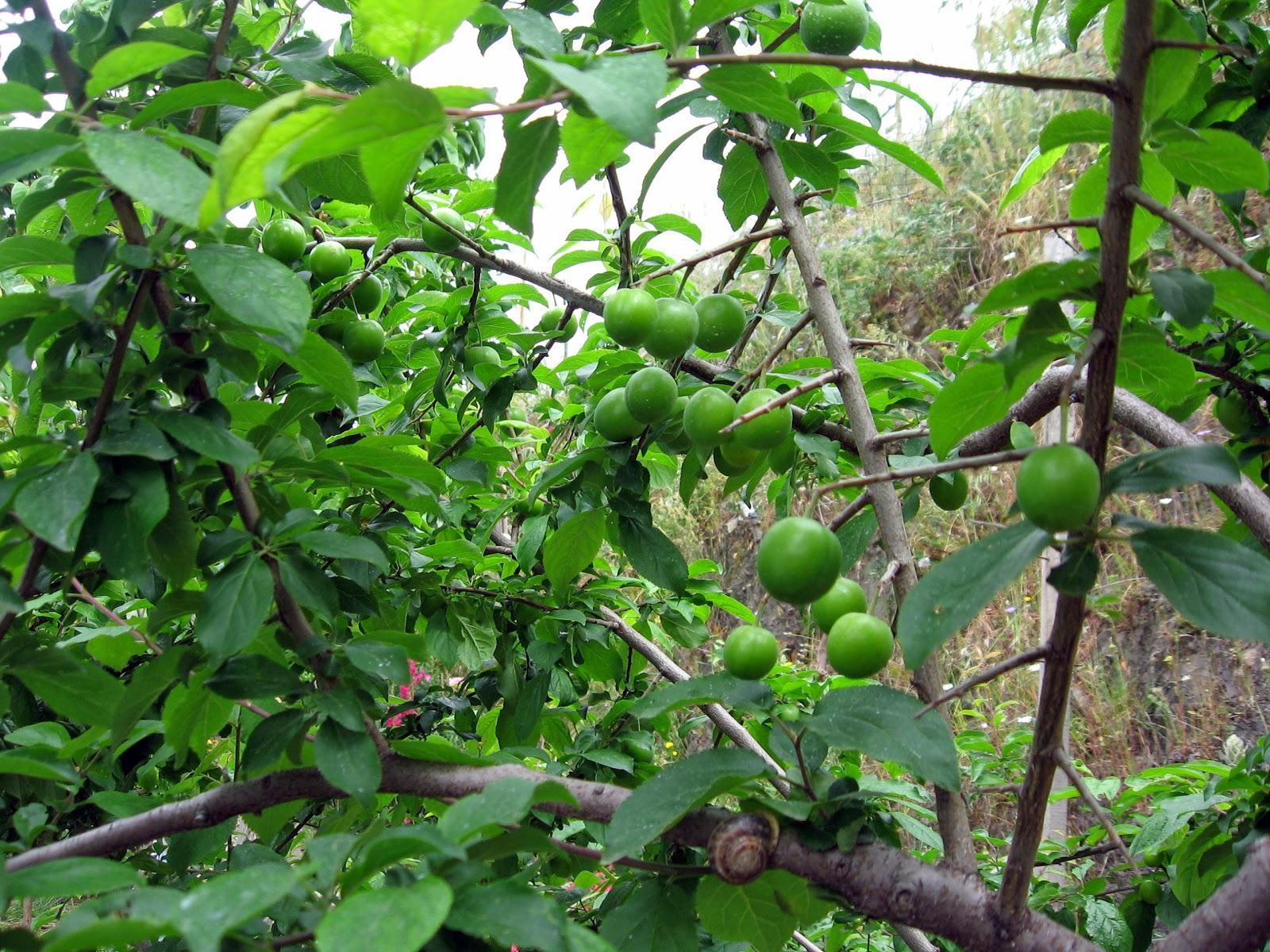Rüyada elma toplamak ne anlama gelir Öğren
