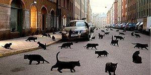 Сможешь ли ты за 15 секунд найти всех кошек на картинке?