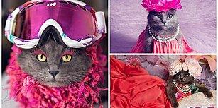 Stiliyle Instagram'ı Sallayan Dünyanın En Karizmatik Kedisi Pitzush'la Tanışın!