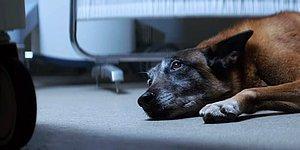 Трогательная реклама, призывающая не бросать животных