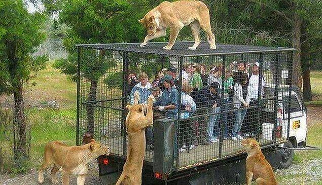 Bizlere düşen ise hayvanları esaret altına alan bu kurumları boykot etmektir. Hayvanat bahçesine, yunus parkına, sirklere gitmeyin!