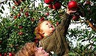 Meyve ve Sebzeleri Tazecik Seçip Tazecik Tüketmeniz İçin Size Gereken 13 Püf Noktası