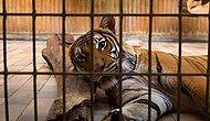 Hayvan Esaretine Artık Bir Son Verilmeli: Dünyanın Gözü Önünde Öldürülen Hayvanlar