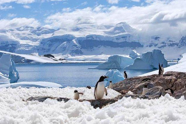 20. Antarktika kıtasının %1'lik bir kısmında buz bulunmamaktadır.