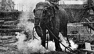 Suç İşledikleri Gerekçesiyle İnsanlar Tarafından İdamla Cezalandırılan 10 Talihsiz Hayvan