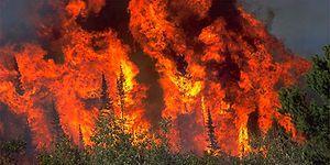 Dikkatsizlik ya da Rant Sebebiyle Geleceği Ateşe Atma Hali: 15 Adımda Orman Yangınları