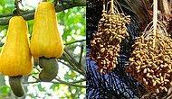 Yetişme Şeklini Görünce Şaşkınlğınızı Gizleyemeyeceğiniz 17 Sebze ve Meyve