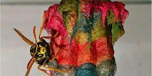 Doğanın Büyüsü! Renkli El İşi Kağıtlarıyla Gökkuşağı Desenli Yuvalar Yapan Yaban Arıları