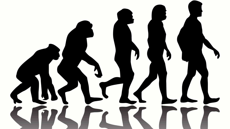 кем контактировали, биологическая эволюция фото люблю