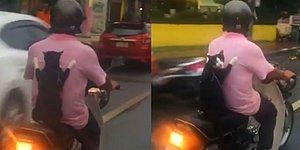 Adamın Arkasında Adeta Bir İnsan Gibi Yolculuk Eden Motorcu Kedi