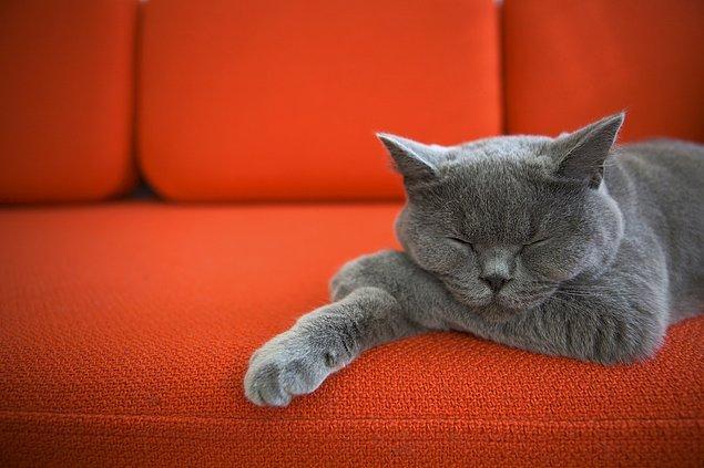 7. Evinizde hayvan besliyorsanız ve bunların tüyleri koltuklarınıza, kanepelerinize bulaşıyorsa elinize yapışkan bir bant sarın ve tüylü olan yerlerde gezdirin.