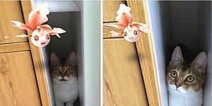 Çılgınlık Sürüyor: Minnoş Hayvanların Pokemonları Görebildiğine İnandıracak 27 An!