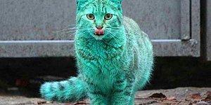 Gözlerinize İnanamayacaksınız Fakat Bu Kedinin Kürkü Gerçekten Yeşil