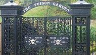 İçerisinde 100'den Fazla Zehirli Bitki Bulunan, Dünyanın En Zehirli Bahçesi: Alnwick