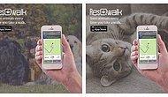 Yalnızca Yürüyerek Barınaktaki Hayvanlara Yardım Etmenizi Sağlayan Bir Uygulama: ResQwalk
