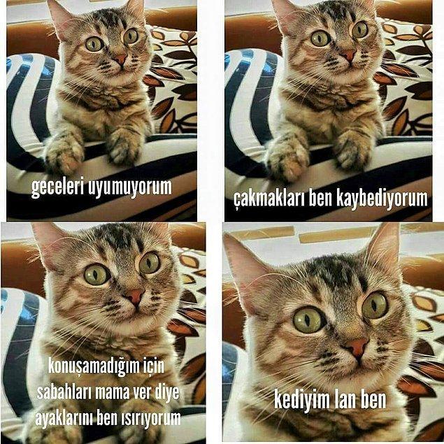 9. Yine kedi
